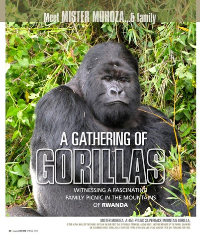 Page 80 of A Gathering of Gorillas