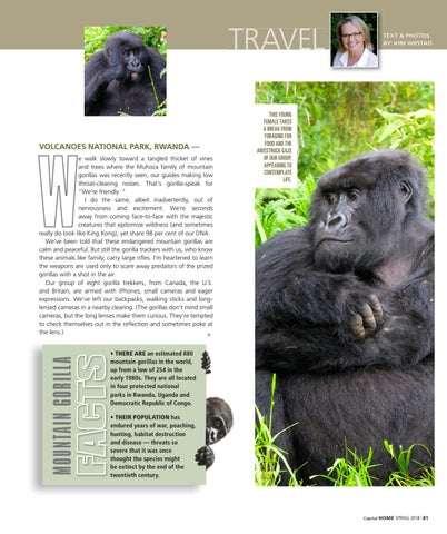 Page 81 of A Gathering of Gorillas