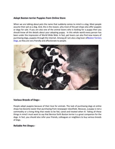 Boston terrier puppies and dogs for sale in usa by