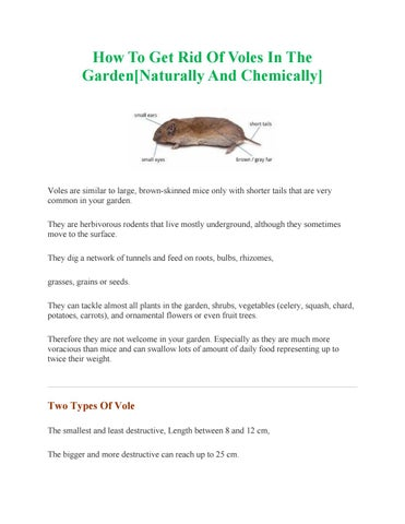 How To Get Rid Of Voles In The Gardennaturally And Chemically By