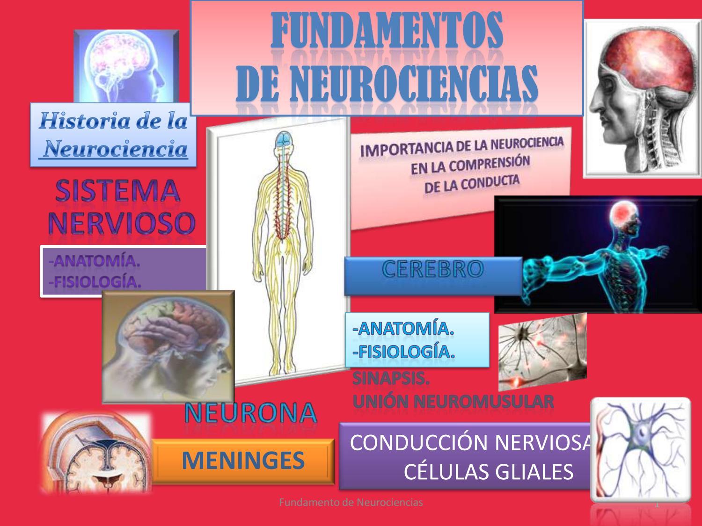 Revista de neurociencias by OLIRIS19 - issuu