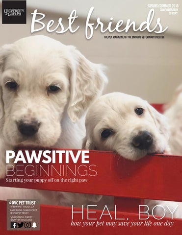 Best friends pet magazine ontario veterinary college spring page 1 solutioingenieria Images