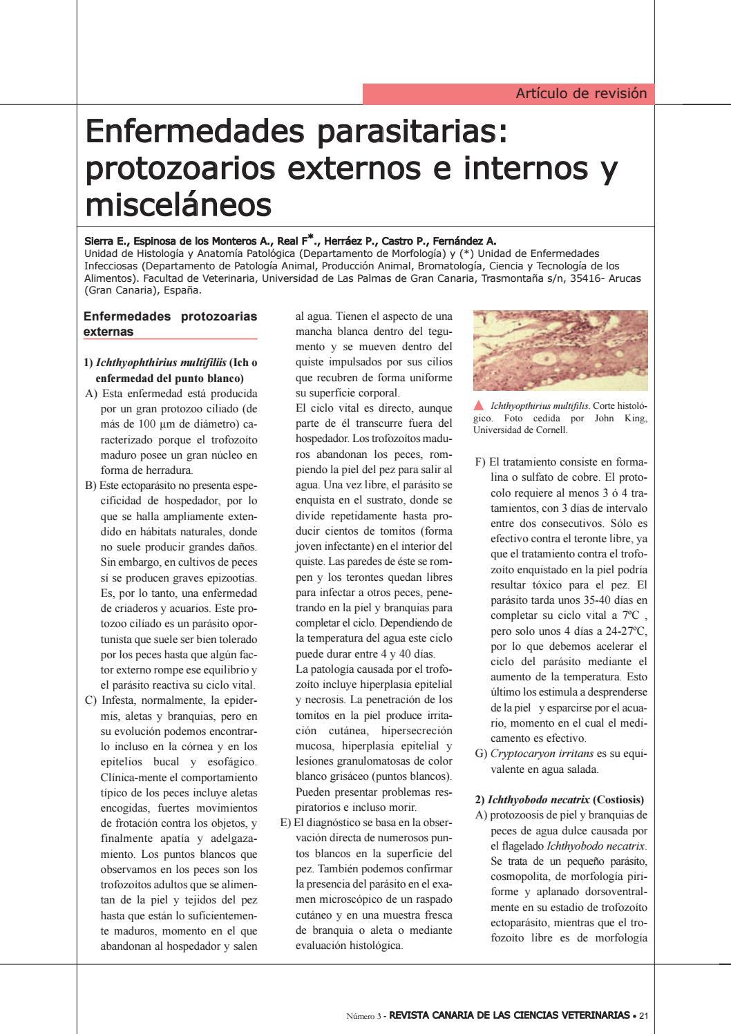Dorable Canal Anatomía Bagre Bandera - Anatomía de Las Imágenesdel ...