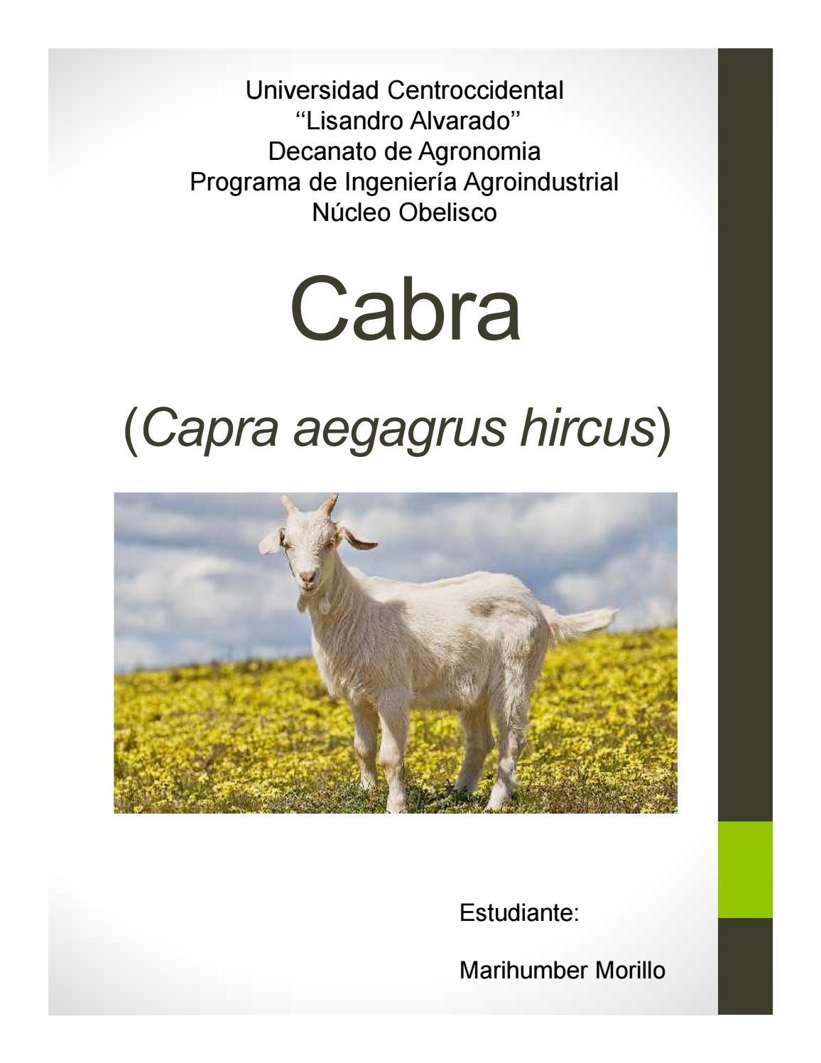 Único Anatomía De Cabras Lecheras Composición - Imágenes de Anatomía ...