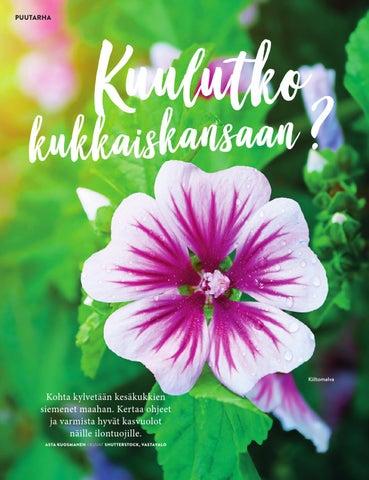 Page 22 of Kuulutko kukkaiskansaan