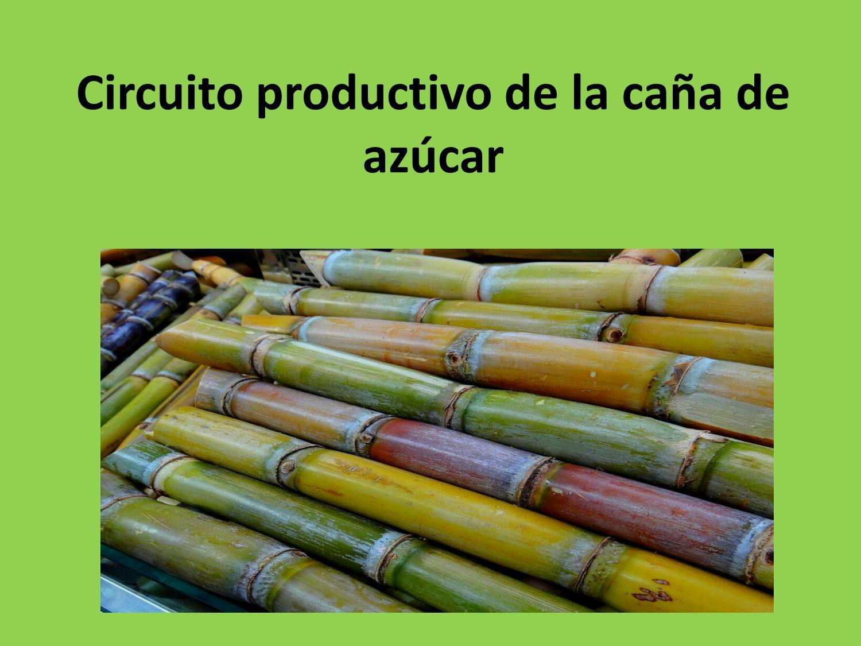 Circuito Productivo De La Caña De Azucar : Circuito productivo de la caña de azúcar by giuliana morgan issuu