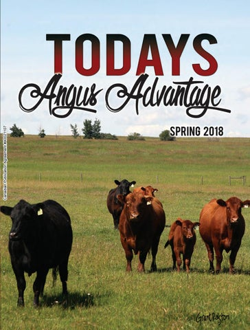 Angus Advantage Spring 2018 by Today's Publishing Inc  - issuu