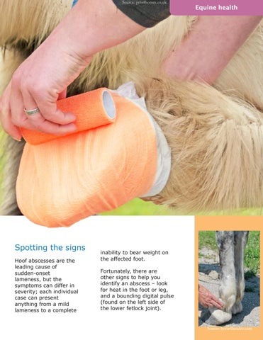 Page 11 of The Low-Down on Hoof Abscesses