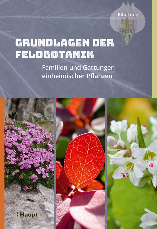 15 Samen Rote Taubnessel,Lamium purpureum#480