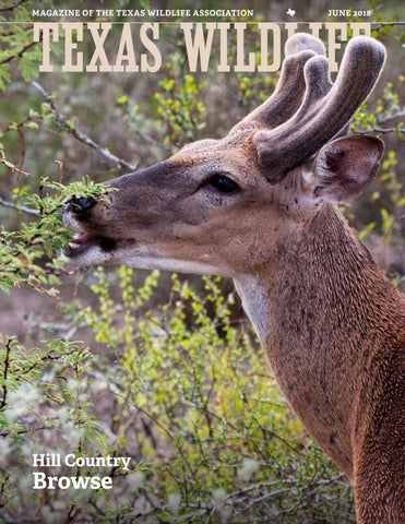 Texas Wildlife June 2018 Hill Country Browse By Texas Wildlife