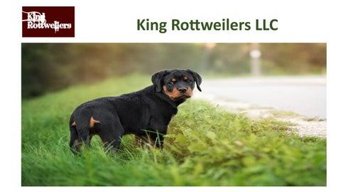 King rottweilers llc by King Rottweilers - issuu