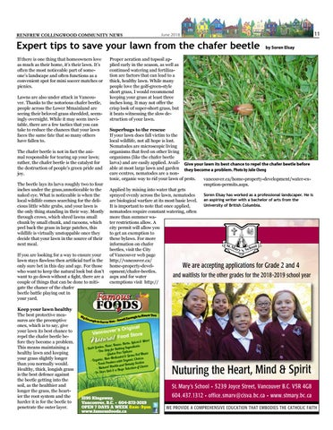 Page 11 of Expert tips to save your lawn from the chafer beetle
