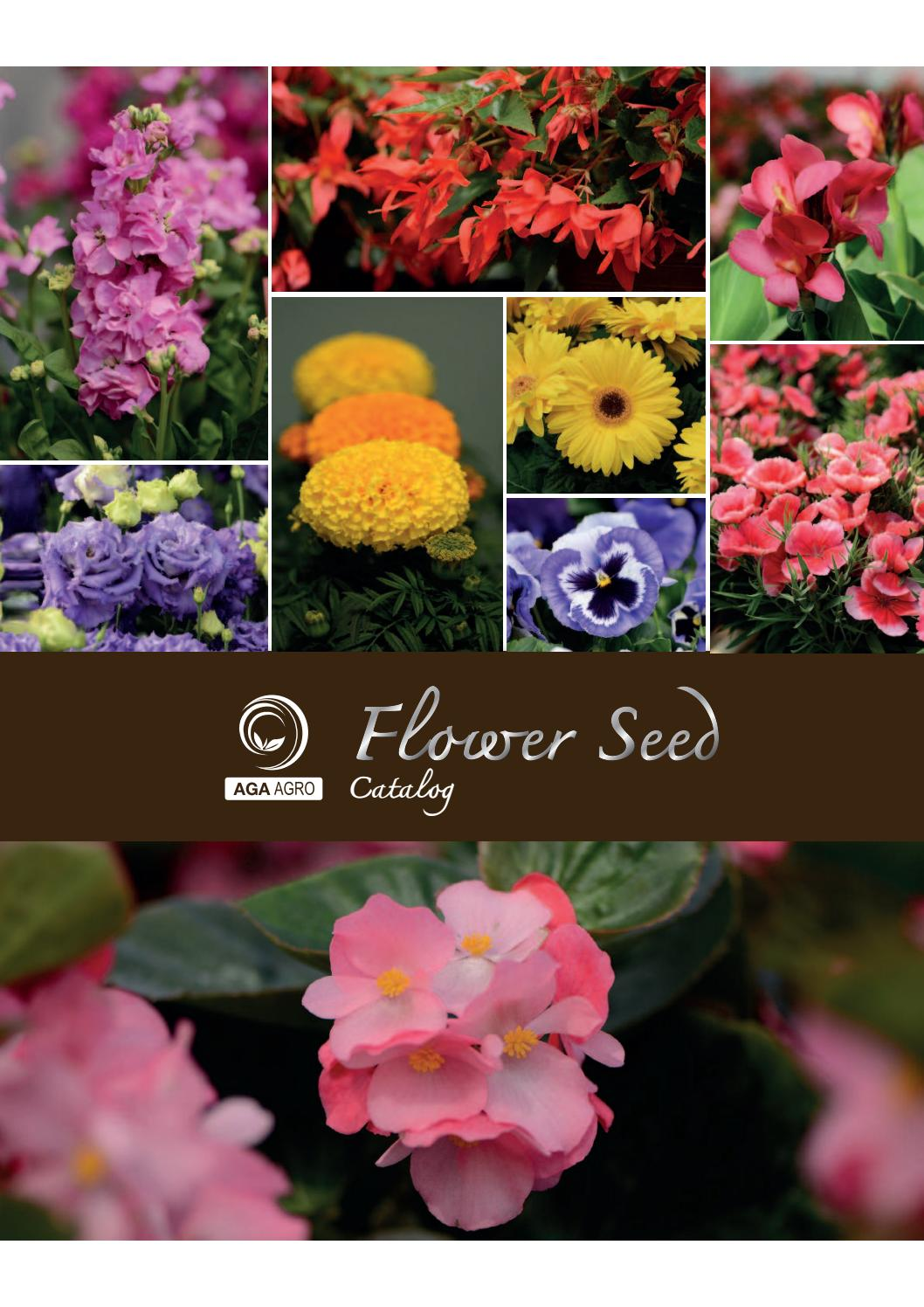 Large Pack Flower 50 Pelleted Seeds Portulaca Happy Trails White