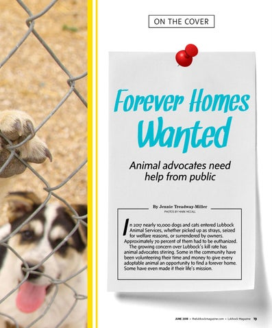 Page 21 of Forever Homes Wanted