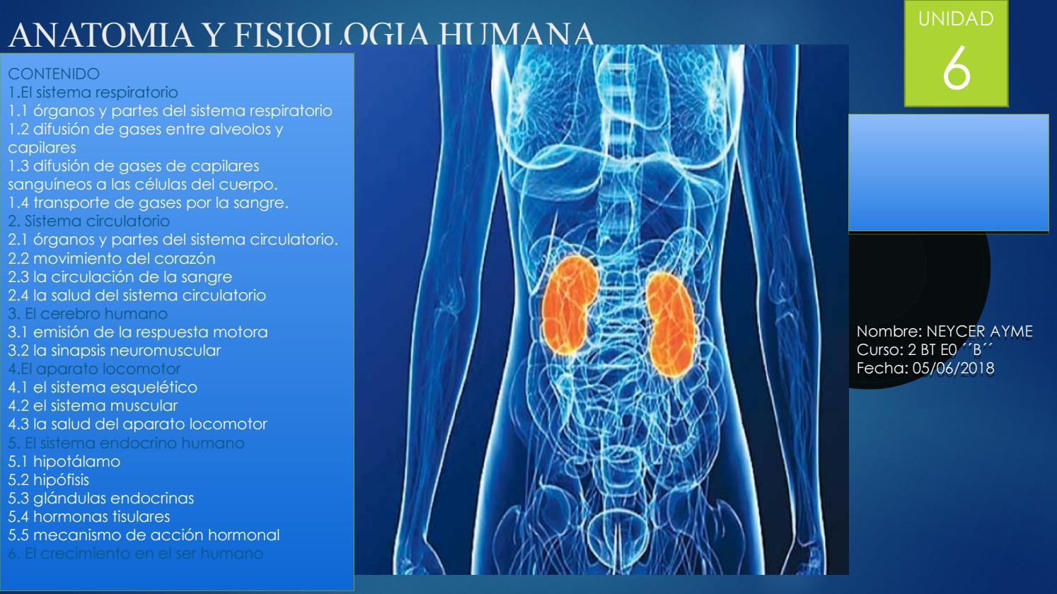 Anatomia y fisiologia humana by neycerayme2017 - issuu