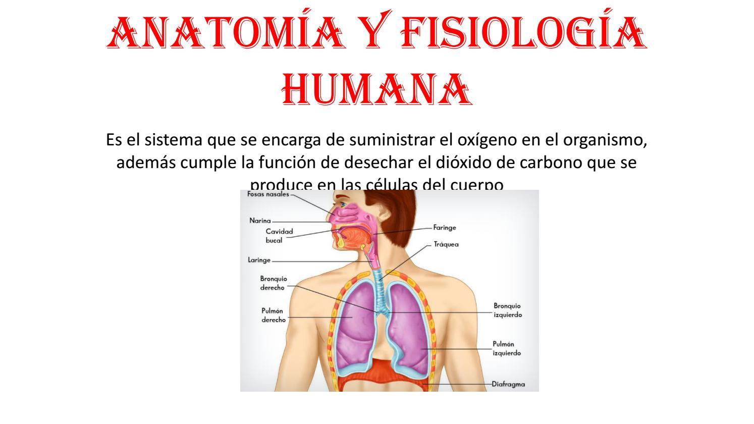 Anatomía y fisiología humana by Jorge Tenelema - issuu