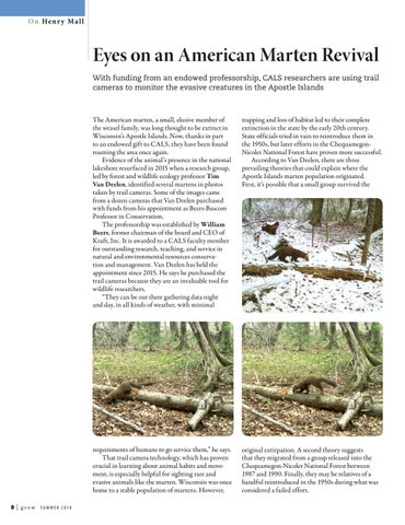 Page 8 of Eyes on an American Marten Revival