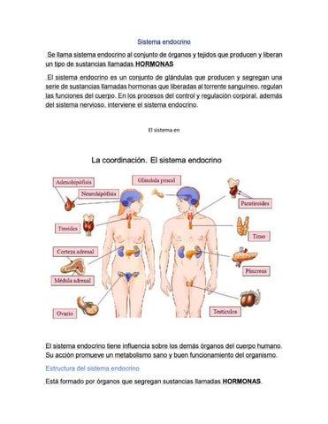 sistema endocrino by mc artidor - issuu