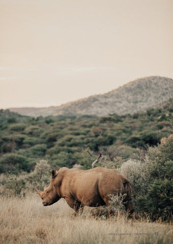 Page 13 of Front line training for those protecting our rhinos