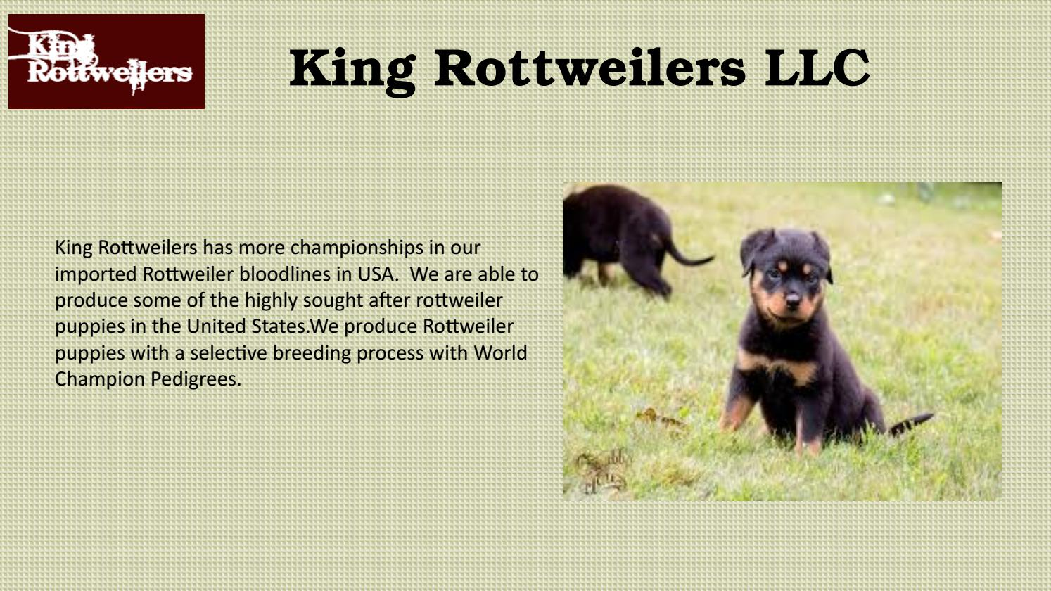 Rottweilers for Sale in California by kingrottweilers - issuu