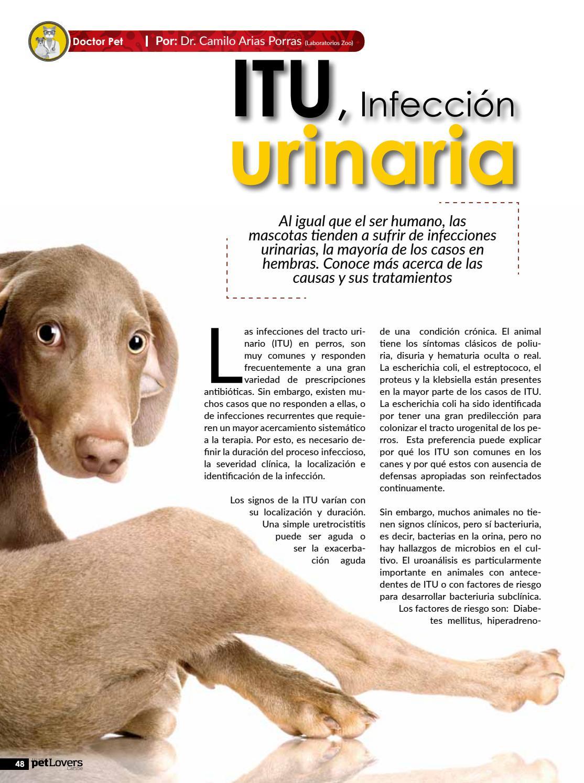 causas infeccion urinaria perros