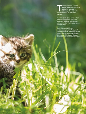 Page 109 of New hope for threatened wildcat species