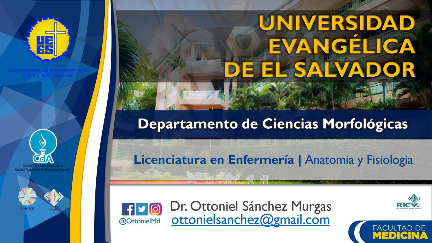 Clase Grupos Musculares - Licenciatura en Enfermería by Ottoniel ...