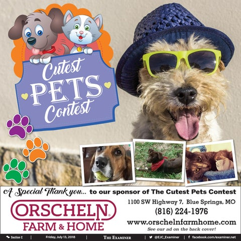 Cutest Pets Contest By The Examiner Issuu