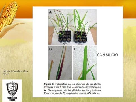 Page 7 of Disminucion de stress hidrico con silicio en Maiz