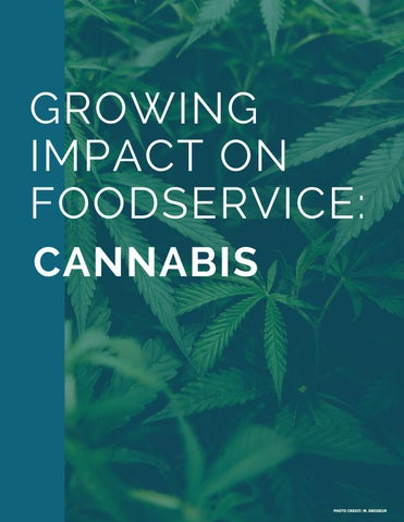 Page 20 of Cannabis impact on foodservice