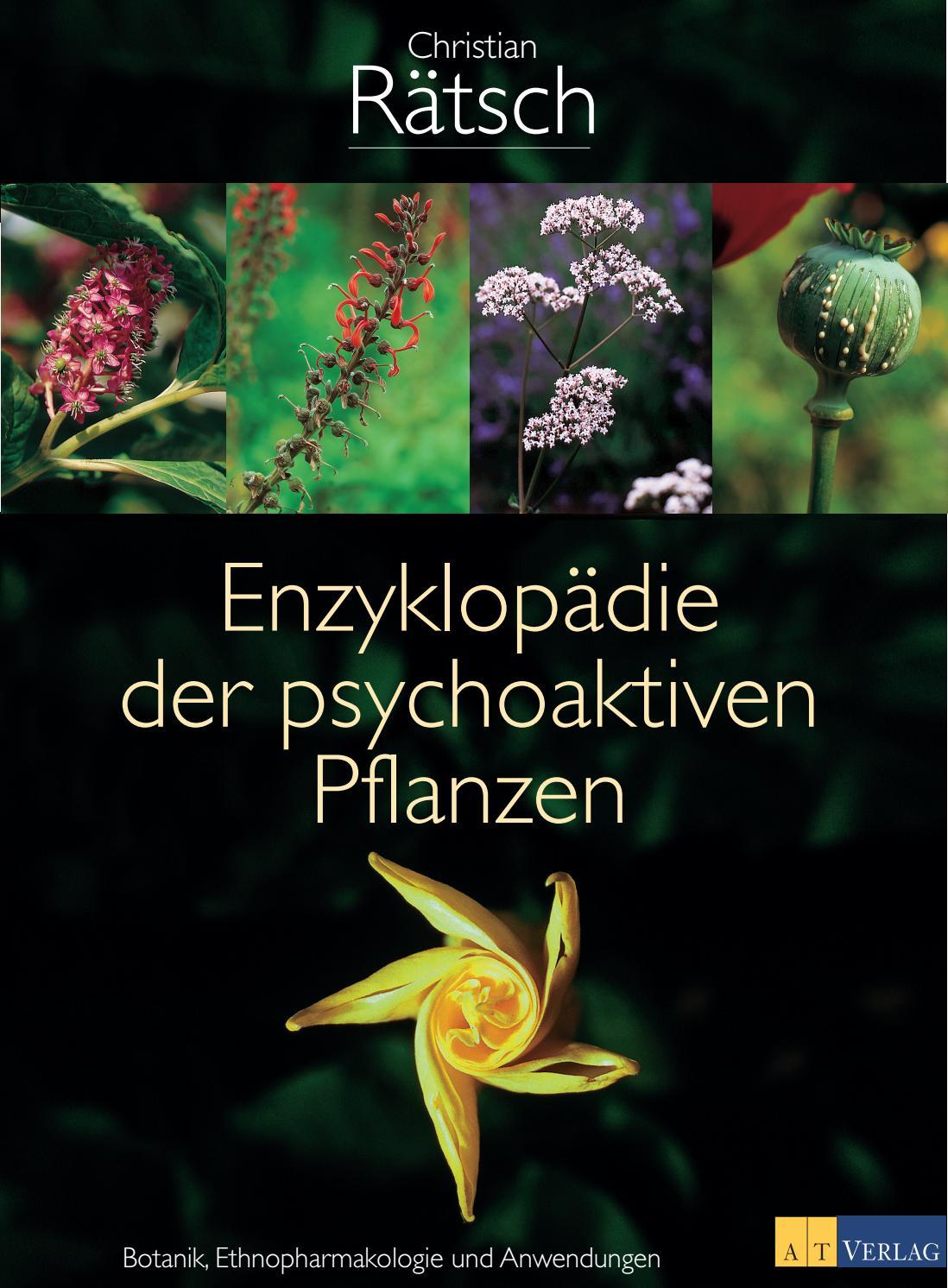 Kardamom Elettaria cardamomum Pflanze 20cm Malabar-Kardamom Zimt-Kardamom Ingwer