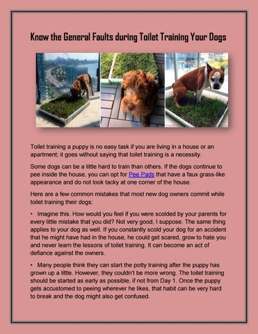 Page 1 Know The General Faults During Toilet Training Your Dogs