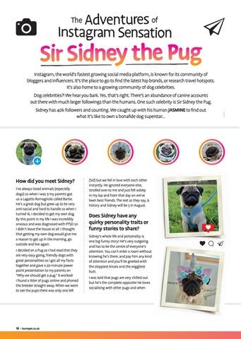 Page 16 of The Adventures of Instagram Sensation, Sir Sidney the Pug