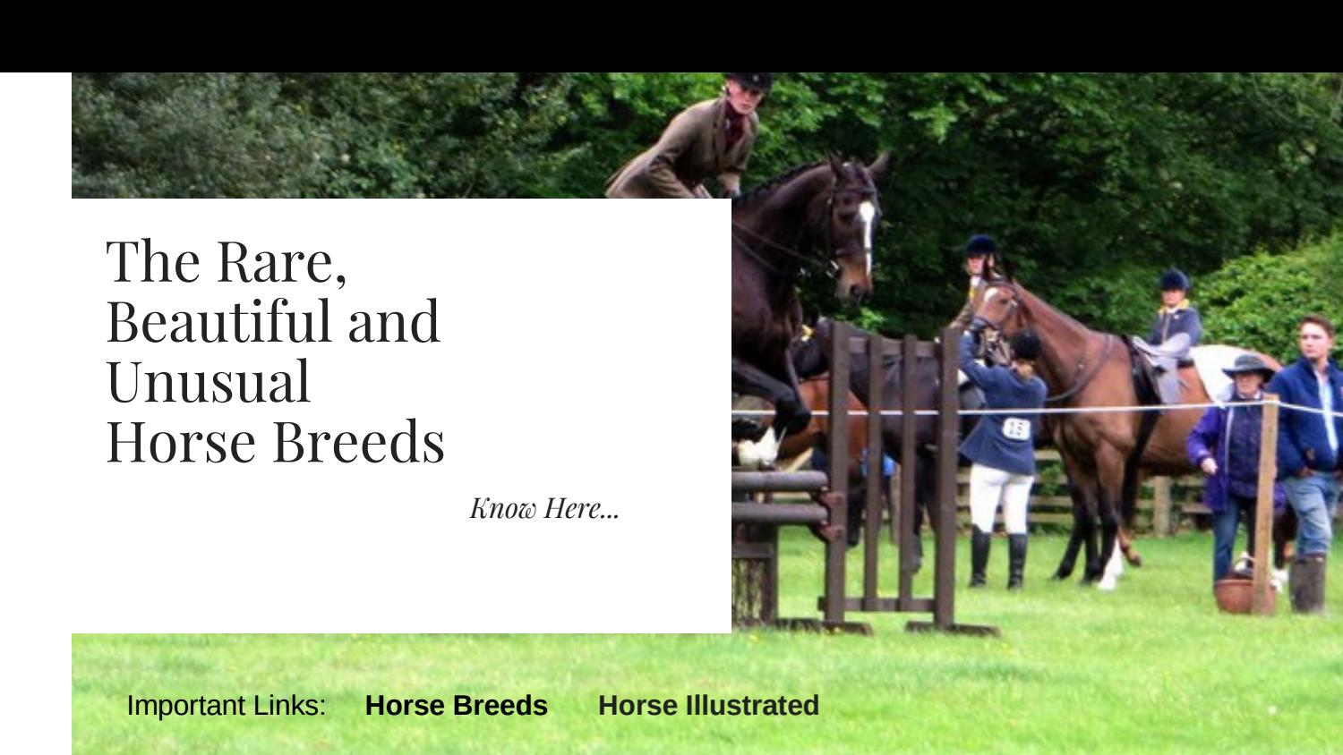 The Rare Beautiful And Useful Horse Breeds By Iamdavidhuge Issuu