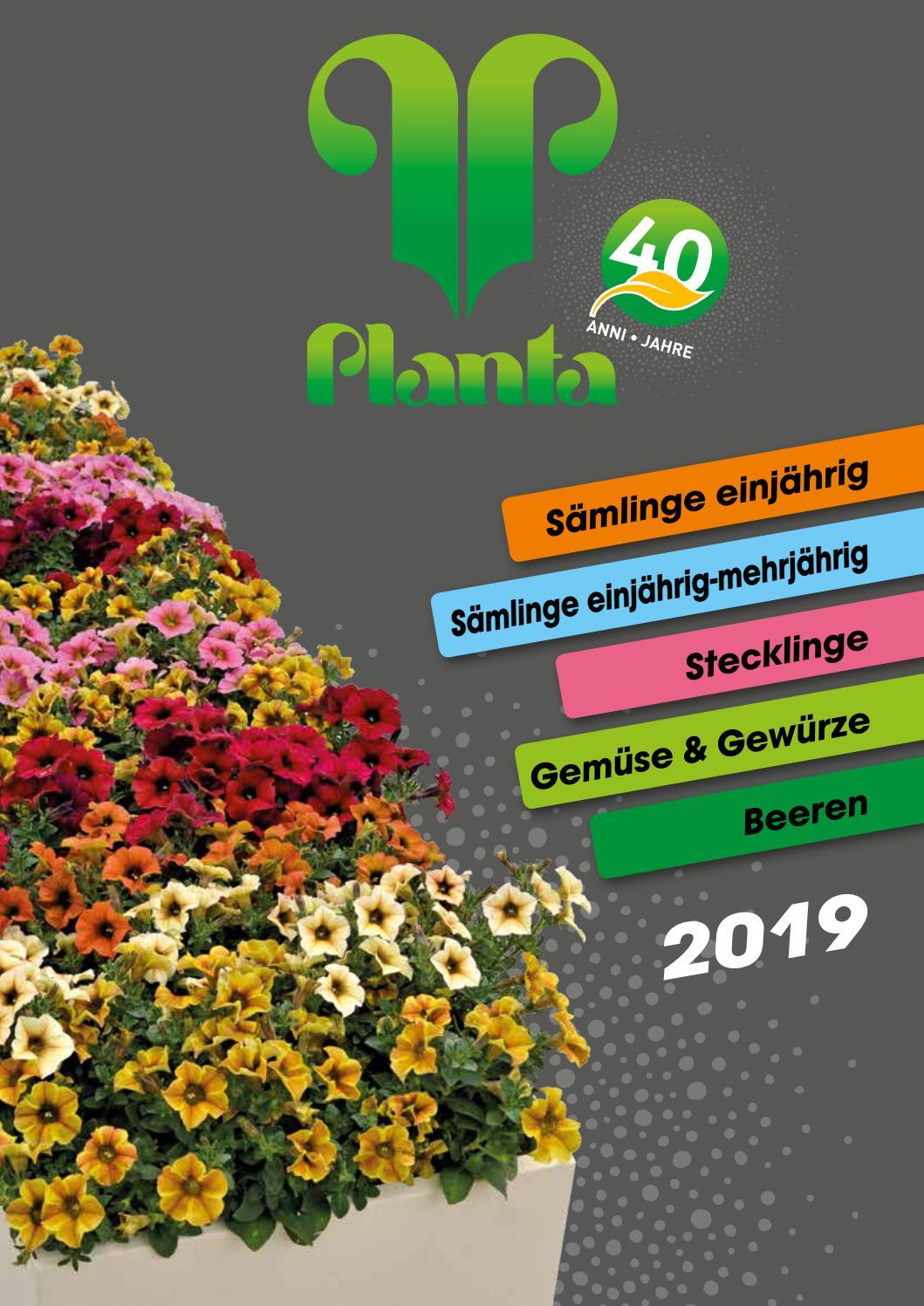 Langlebig Annual Blumensamen 50 Magellen Mix Zwerg Zinnie