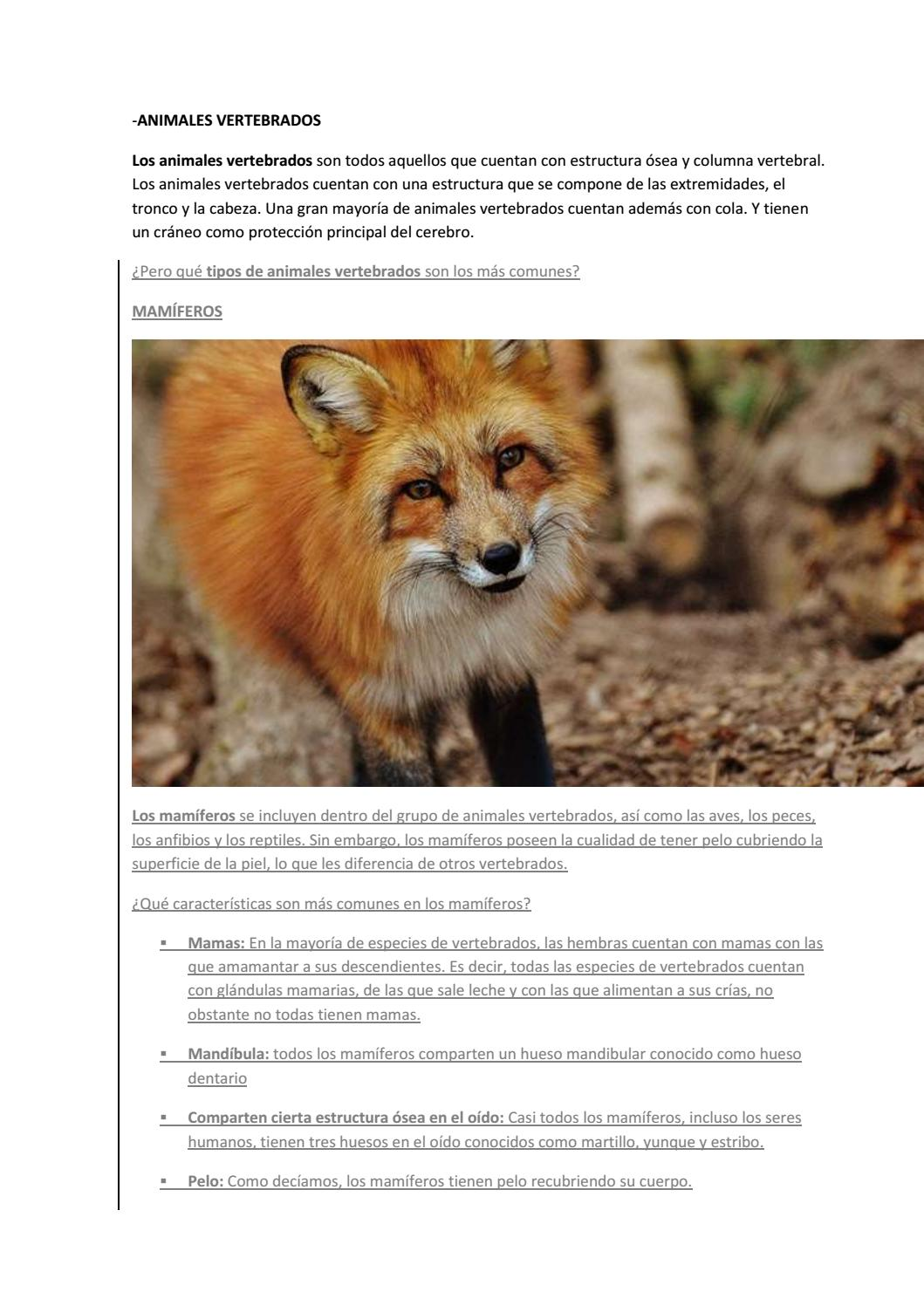 Tipos de Animales by odalyszambrano6 - issuu