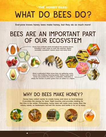 The Honey Files What Do Bees Do By Blue Lion Digital Issuu