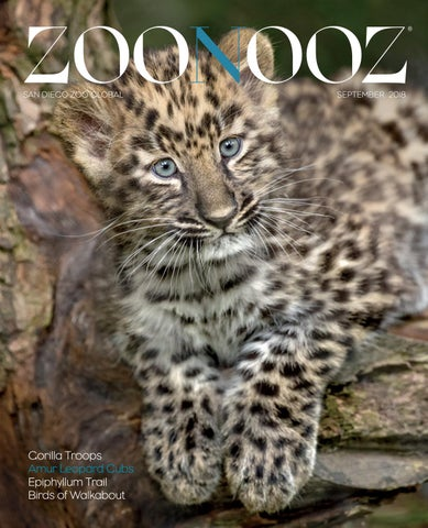 a256cab491f4 ZOONOOZ September 2018 by San Diego Zoo Global - issuu