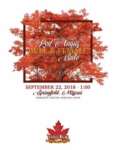Maple Oaks Red Angus Bull & Female Sale by Tracy McMurphy