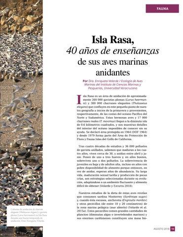 Page 11 of Isla Rasa, 40 años de enseñanzas de sus aves marinas anidantes