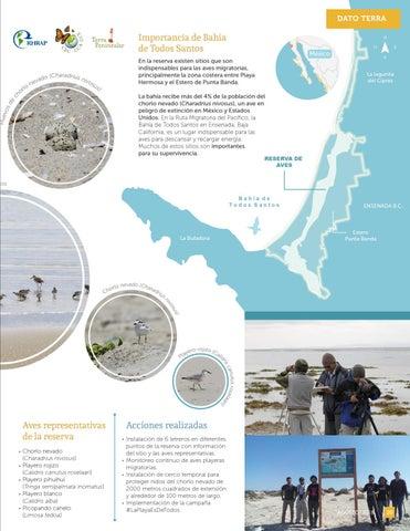 Page 21 of Reserva de aves Bahía de Todos Santos