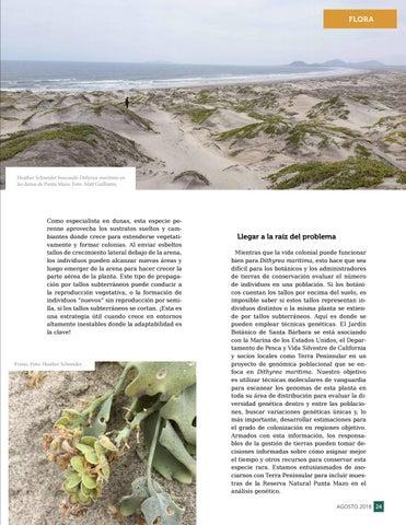 Page 25 of Conservación colaborativa para comprender y proteger una especie única llamada Dithyrea maritima