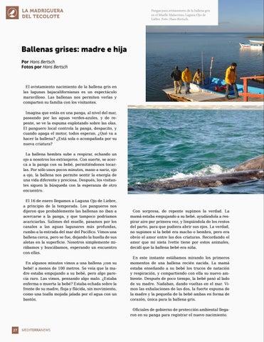 Page 28 of Ballenas grises: madre e hija