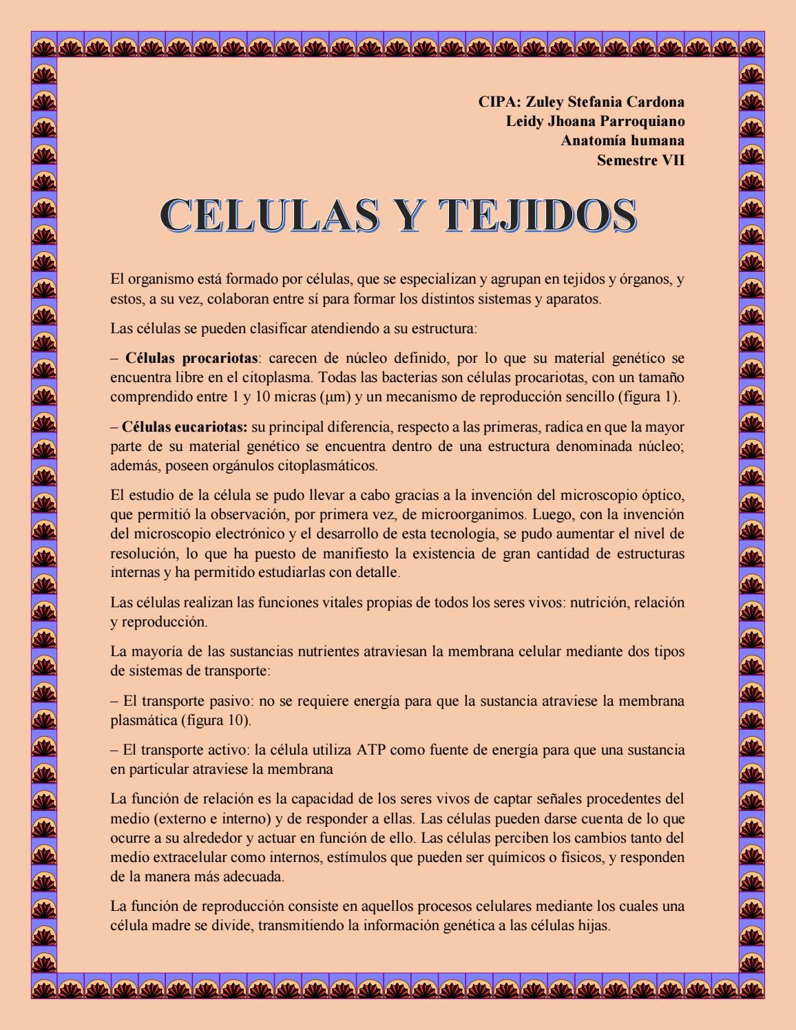 Celulas Y Tejidos By Leidy Jhoana Parroquiano Vargas Issuu