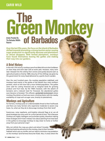 Page 18 of Barbados Green Monkey