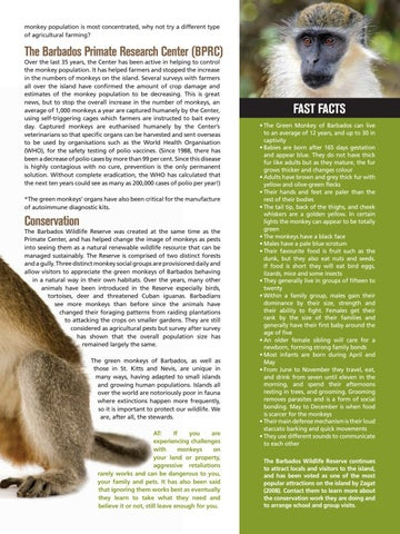 Page 19 of Barbados Green Monkey