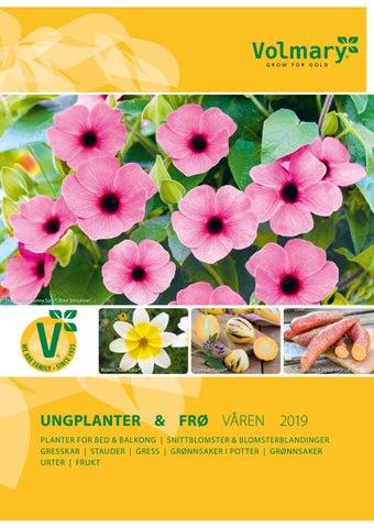 305d57c9 Volmary våren 2019 by Kari-Anne Berget - issuu