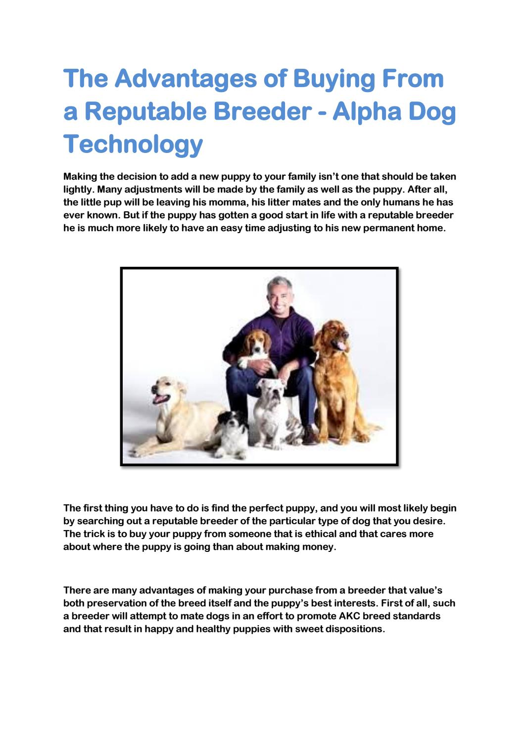 The Advantages of Buying From a Reputable Breeder - Alpha