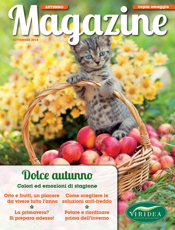 Composizioni Facili Di Frutta viridea | magazine autunno | settembre 2018 by viridea