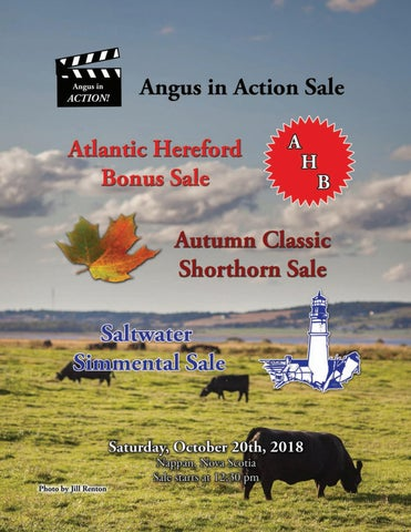 Angus in Action/Autumn Classic/Saltwater Simmental/Atlantic